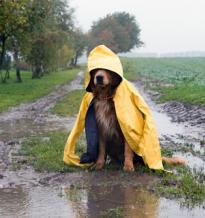 Raindrops keep faliing on my head...